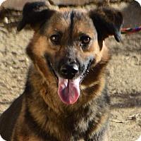 Adopt A Pet :: Cheyenne - Campbell, CA