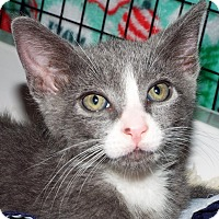 Adopt A Pet :: Gino - Grants Pass, OR
