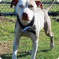 Adopt A Pet :: Bianca - Terrell, TX