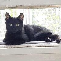Adopt A Pet :: Buddy Woof - Little Rock, AR
