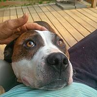 Adopt A Pet :: ROXXIE - Kimberton, PA