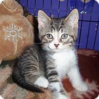 Adopt A Pet :: DALTON - Medford, WI