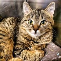 Adopt A Pet :: Meeka - Wellsville, NY
