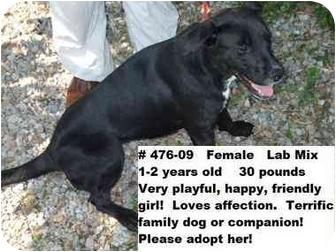Labrador Retriever Mix Dog for adoption in Zanesville, Ohio - # 476-09 - ADOPTED!
