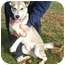Photo 1 - Husky Mix Dog for adoption in Metamora, Indiana - Ryder