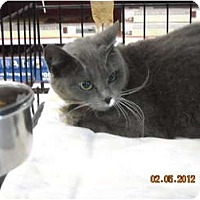 Adopt A Pet :: Mitzi - Riverside, RI