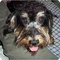 Adopt A Pet :: lois - Cincinnati, OH