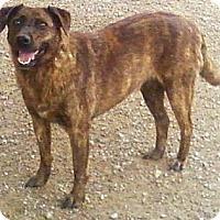 Adopt A Pet :: Breezee - Toledo, OH