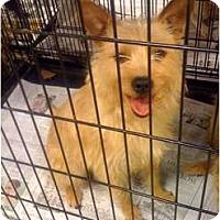 Adopt A Pet :: Holly - Fowler, CA