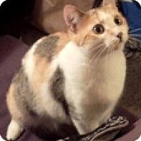 Adopt A Pet :: Casey - Vancouver, BC