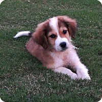 Adopt A Pet :: *Maddox - PENDING - Westport, CT
