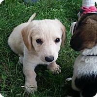 Adopt A Pet :: Zapspot - Albert Lea, MN