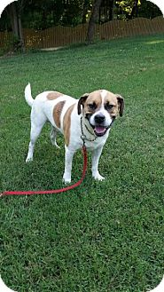 Boxer Mix Dog for adoption in Manhasset, New York - Healer