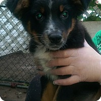 Adopt A Pet :: Hope - Antioch, IL