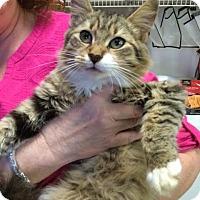 Adopt A Pet :: Buttons - McDonough, GA