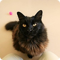 Adopt A Pet :: Stormy - Kingston, WA