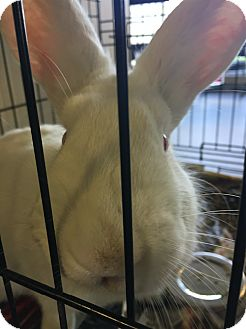 New Zealand Mix for adoption in Lindsay, Ontario - Catelyn