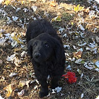 Adopt A Pet :: Thelma - Providence, RI