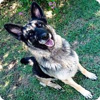Adopt A Pet :: Beauty - Vernon, TX