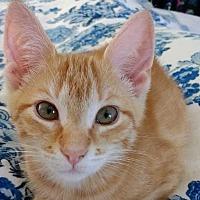 Adopt A Pet :: Sweet One - Homewood, AL