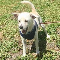 Adopt A Pet :: Spring - Boca Raton, FL