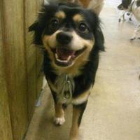 Adopt A Pet :: Spanky - Fairfax Station, VA