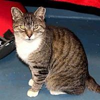 Adopt A Pet :: THUMPER - Hampton Bays, NY