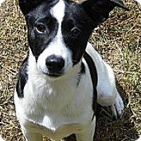 Adopt A Pet :: Emma - Bel Air, MD