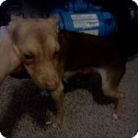 Adopt A Pet :: Snickers - North Benton, OH