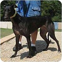 Adopt A Pet :: Cricket - Oak Ridge, NC