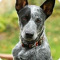 Adopt A Pet :: Hank - Delano, MN