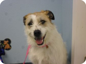 Terrier (Unknown Type, Medium) Mix Dog for adoption in Fort Lupton, Colorado - Hefty