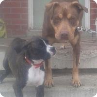 Adopt A Pet :: Chia - Northumberland, ON