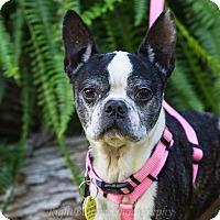 Adopt A Pet :: Roxanne - Adoption Pending - Greensboro, NC