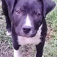 Adopt A Pet :: Carly - Houston, TX