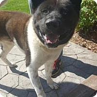 Adopt A Pet :: Lager - ROME, NY