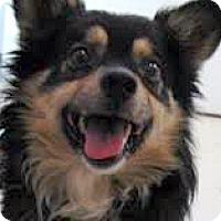 Adopt A Pet :: Julius-ADOPTION PENDING - Boulder, CO