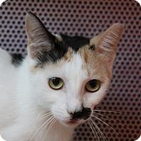 Adopt A Pet :: Juanita - Sarasota, FL