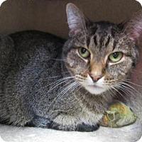 Adopt A Pet :: Louie - Northfield, MN