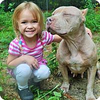 Adopt A Pet :: Pancake - Tampa, FL