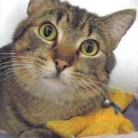Adopt A Pet :: Dusty - Waupaca, WI