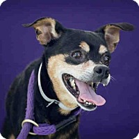 Adopt A Pet :: AUGUST - Downey, CA