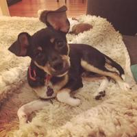 Adopt A Pet :: Lucky_TX - Baltimore, MD