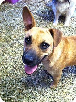 German Shepherd Dog Mix Dog for adoption in La Crosse, Wisconsin - Katniss