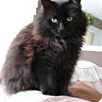 Adopt A Pet :: Puffy - Dallas, TX