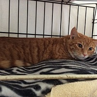 Adopt A Pet :: Red - Mt Pleasant, PA