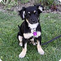 Adopt A Pet :: RADCLIFF - Newport Beach, CA