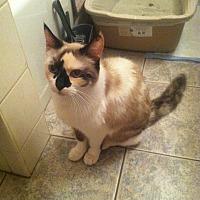 Adopt A Pet :: Mozart - Cerritos, CA