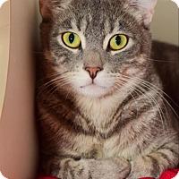 Adopt A Pet :: Noble - Oceanside, CA