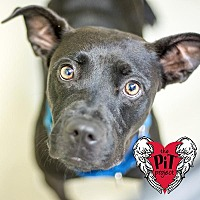 Adopt A Pet :: Theresa - St. Petersburg, FL
